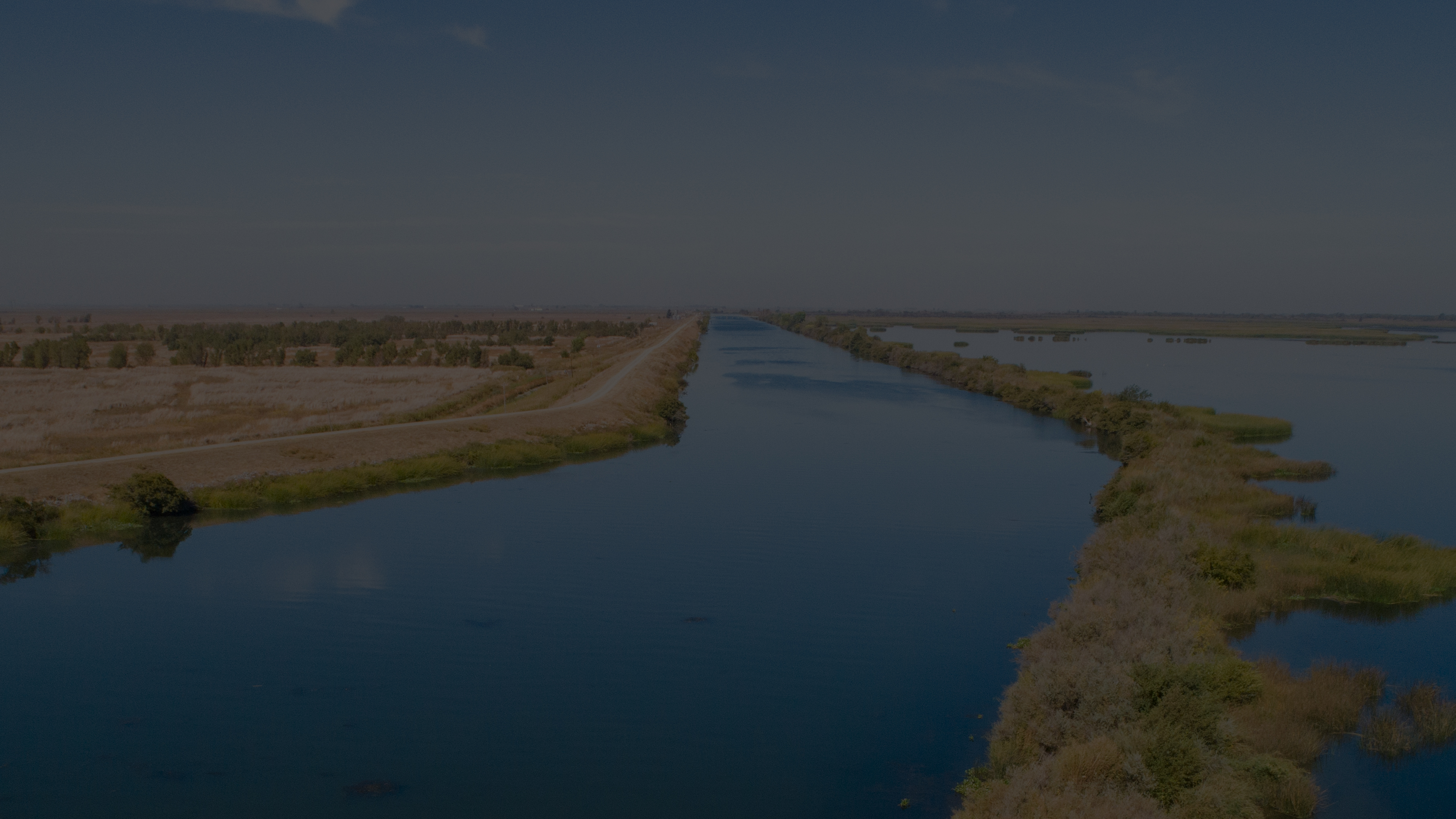 Tule grows in the habitat surrounding the future location of the Lookout Slough Tidal Restoration Project in the Sacramento-San Joaquin Delta.